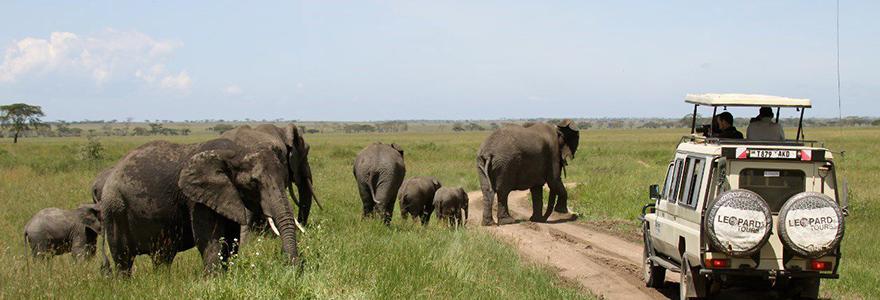 la voiture du safari